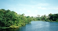 amazon jungle5blg.jpg