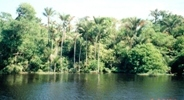 amazon jungle6blg.jpg